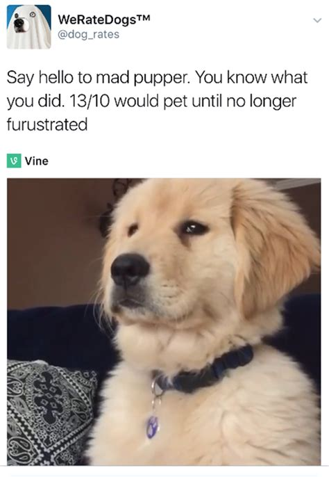"""""""We Rate Dogs"""" Are Hilarious - 16 Pics"""