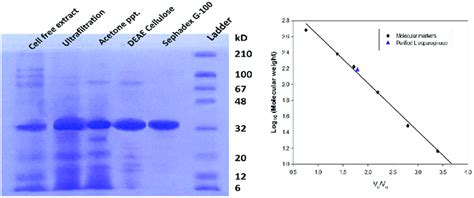 Molecular weight determination of purified enzyme (a) SDS