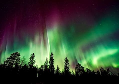 Are Japanese tourists conceiving under the Northern Lights